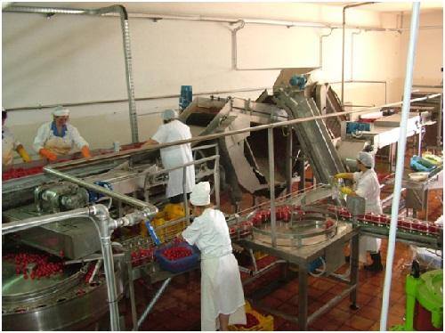 Tvornica za preradu rajčice 09